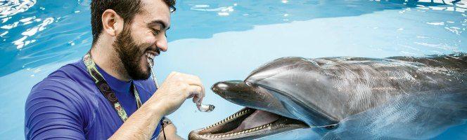 dubai-dolphinarium-trainer-for-a-day