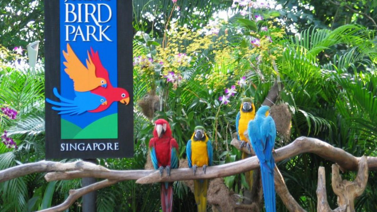 Image result for images of jurong bird park