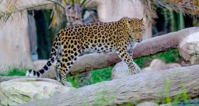 Emirates Park Zoo & Resort Tickets