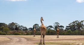 Werribee Zoo Melbourne