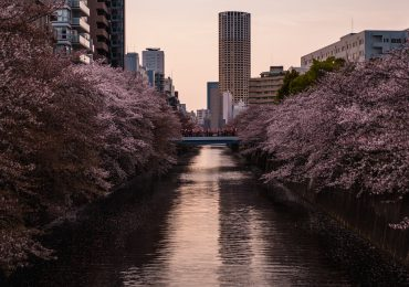 cherry blossom tours japan